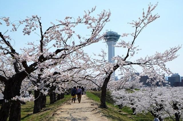 春の函館観光アイキャッチ
