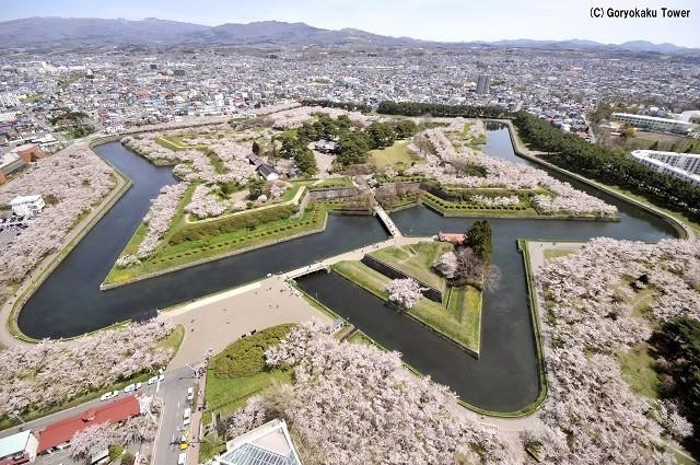 五稜郭タワーからの桜