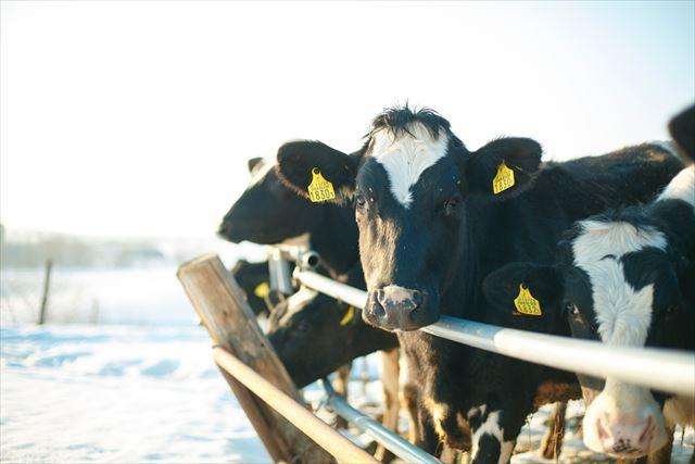 よつ葉乳業株式会社 酪農イメージ