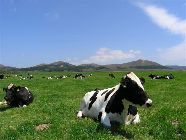 牛のおっぱいミルク白 牧場イメージ