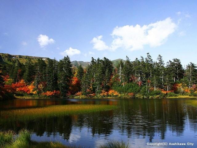 Daisetsu Highland Marsh