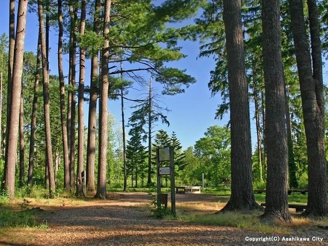 外国樹種見本林