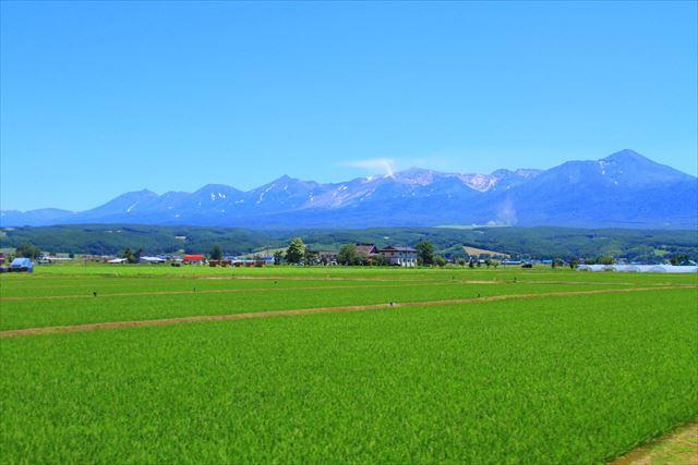 北海道の夏 イメージ