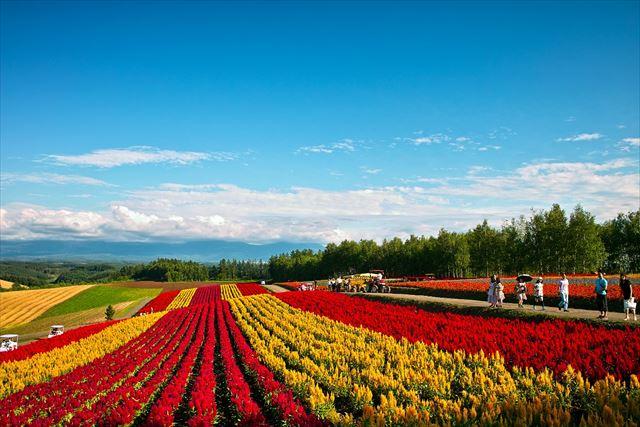 Hillside Flower Garden Shikisai-no-Oka