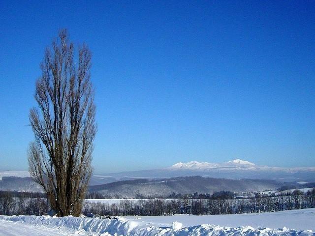 冬のケンとメリーの木