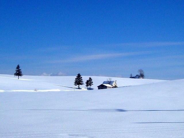 冬の美瑛の風景