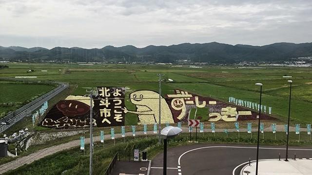新函館北斗駅の田んぼアート