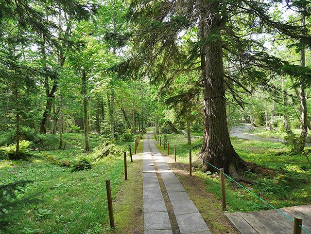 ノンノの森