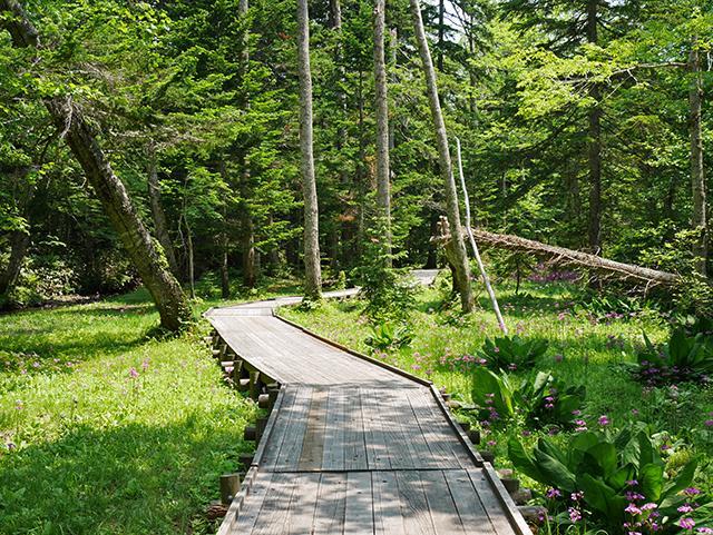 ノンノの森 こもれびの道