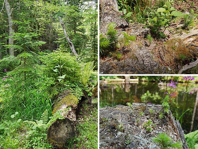 森の散策ガイド50分コース