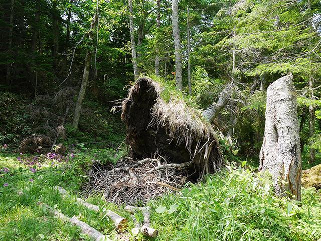 自然災害で倒れた木