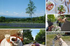 十勝ヒルズ|花と食と農のテーマパークで癒しの時間を満喫♪