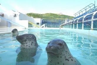 北海道の水族館