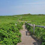 天然のお花畑「小清水原生花園」と周辺のおすすめスポット4選