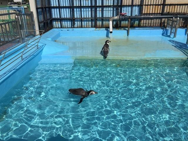 室蘭水族館ペンギン