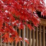 函館とその周辺の秋を満喫!おすすめの紅葉スポット5選