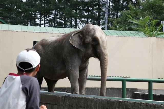 おびひろ動物園-ぞう