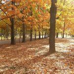 秋到来!紅葉の円山・藻岩山と界隈のおすすめカフェ
