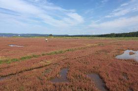 サンゴ草は今が見ごろ!真っ赤に染まるオホーツクの秋を見に行こう