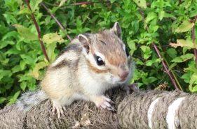 オホーツクシマリス公園は癒し度満点なリスの楽園!+周辺の網走癒しスポット4選