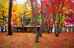 函館の紅葉の名所・香雪園!紅葉を満喫するもみじフェスタと四季の楽しみ方