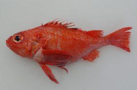 水揚量北海道1位!港町釧路で買いたい魚介とそのシーズン