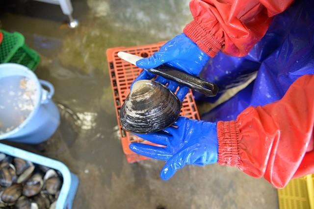釧路の魚イメージ