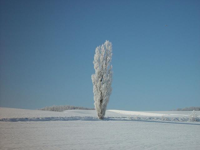 冬の美瑛冒頭