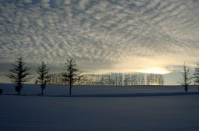 冬、雪の中だからこそ見たい絶景!美瑛の冬景色7選