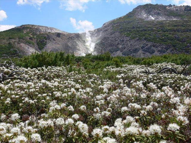 硫黄山とシロツツジ