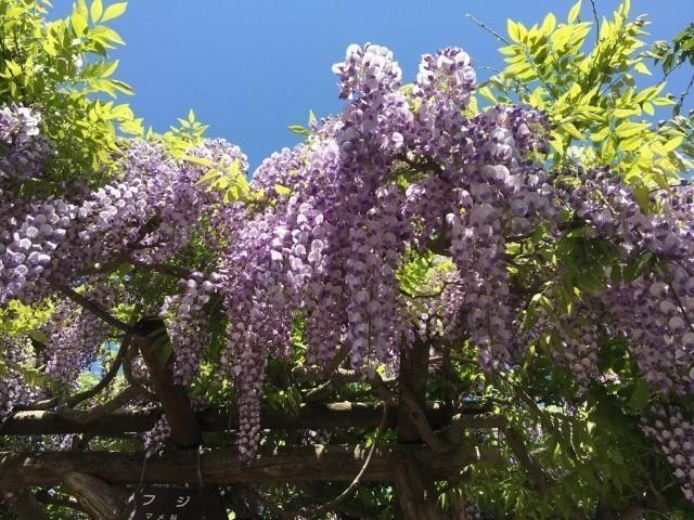 道南春の花イメージ