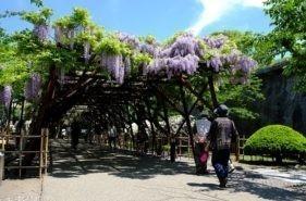桜だけじゃない!函館・道南の春を彩る花々5スポット