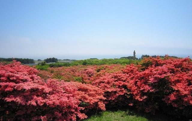 恵山つつじ公園1