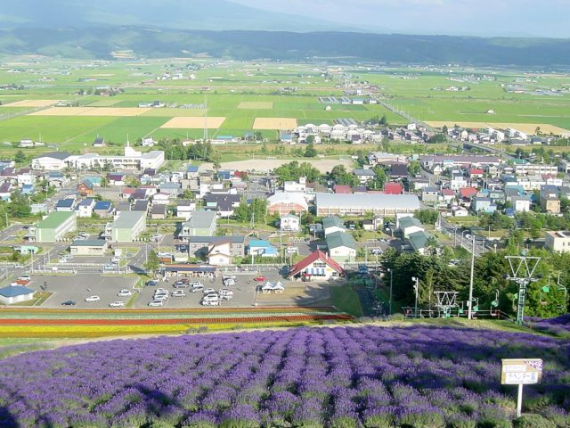 中富良野町经营薰衣草园