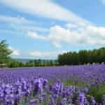 夏の北海道1番人気の日帰りバスツアーで、旭山動物園&富良野・美瑛に行ってきました♪
