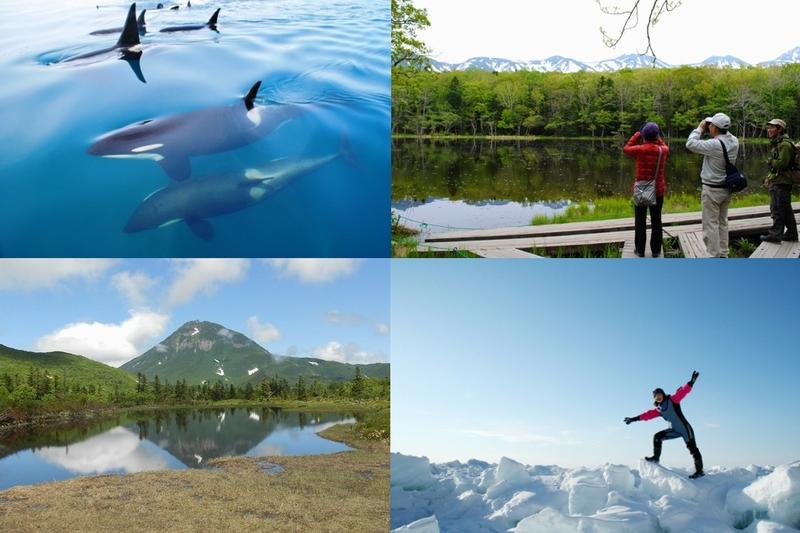 知床の観光イメージ