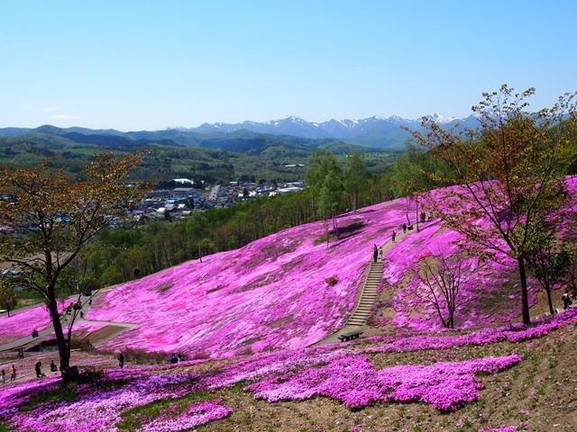 滝上芝桜公園