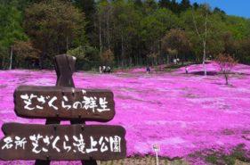 【芝桜の名所、滝上】山が一面ピンク色!滝上町の春を告げる芝ざくらまつり