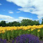 季節の花を楽しむ!札幌市の癒しスポット「百合が原公園」