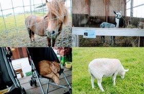 「アースドリーム角山農場」へ動物たちとふれあいに行こう!