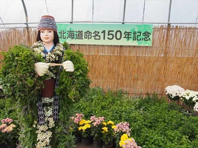 きたみ菊祭り アイヌ 菊人形