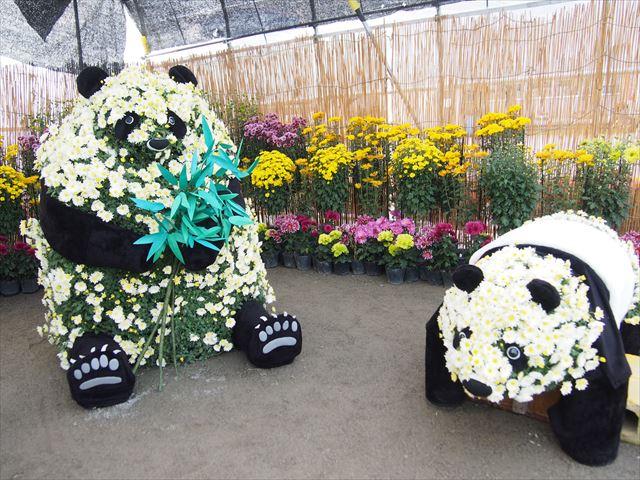 きたみ菊祭り 菊人形 パンダ2