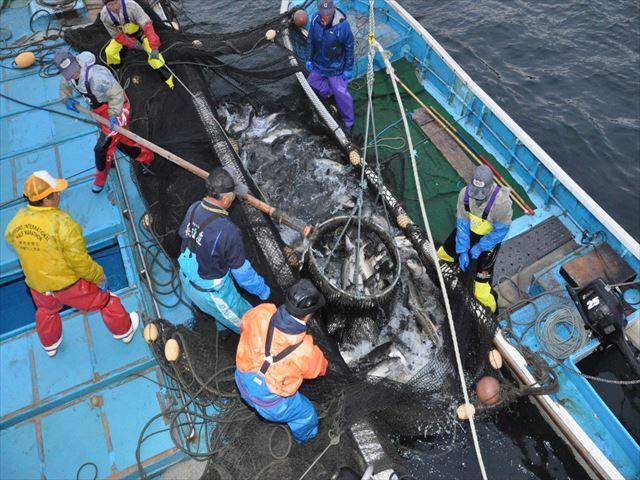 北海道 鮭 漁