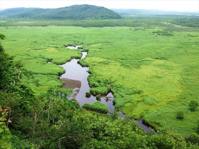釧路湿原 展望台 緑の中の沼