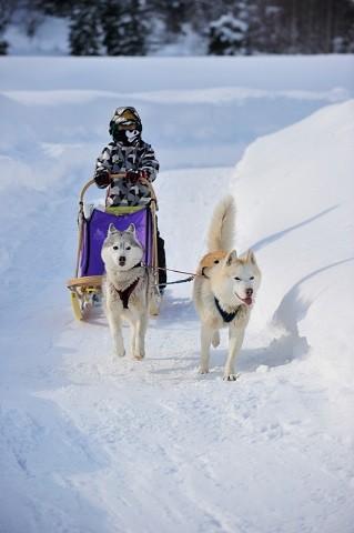 定山渓温泉 雪三舞 犬ぞり