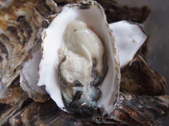 湧別かきまつり サロマ湖の牡蠣