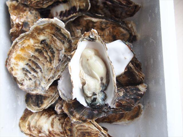 湧別かきまつり 小ぶりだが濃厚で美味しい牡蠣