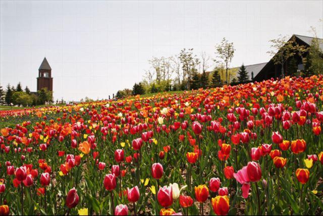 札幌春の花滝野すずらん公園