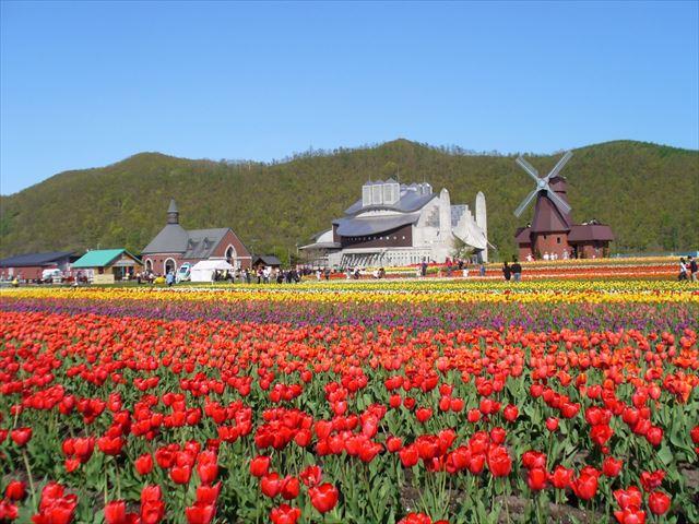 北海道 春 花 かみゆうべつチューリップ公園