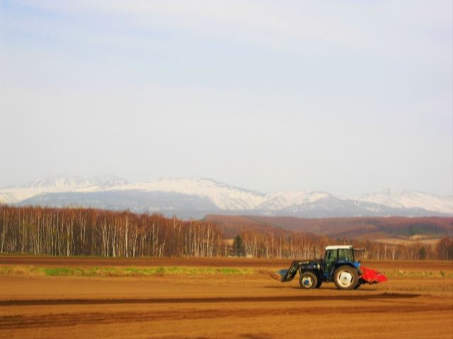 北海道 春 花 美瑛の春紅葉と畑